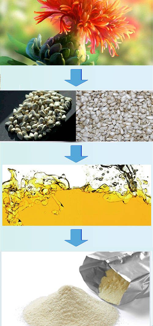 pumpkin seed protein manufacture