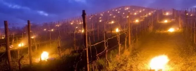 anti frost candles, against frost candles, China vineyards antifrost candles